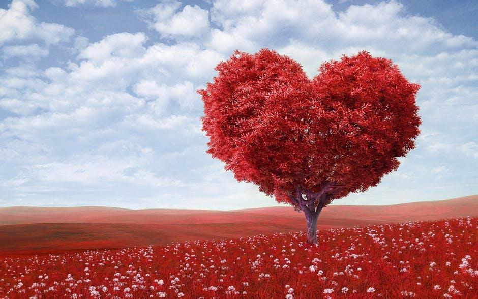 geen roze wolk wel veel liefde